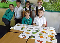 Y3 Science - Plants